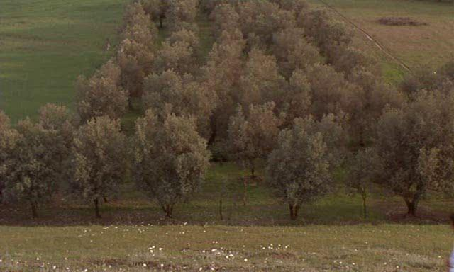 through the olive trees ending