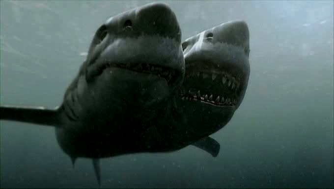 2-headed-shark-attack