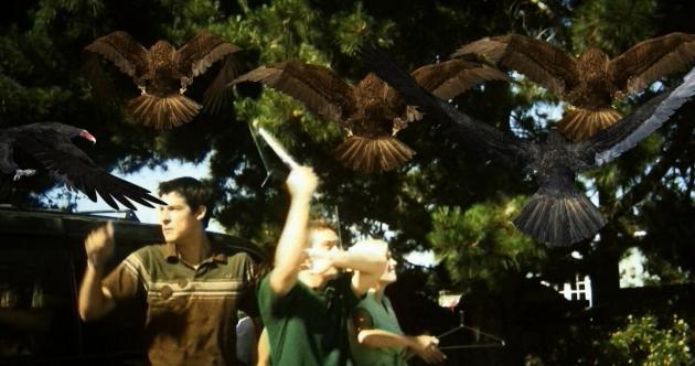 birdemic-shock-and-terror